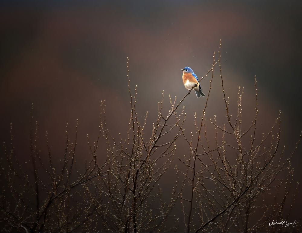 a bluebird sitting on a tall branch in the wide open