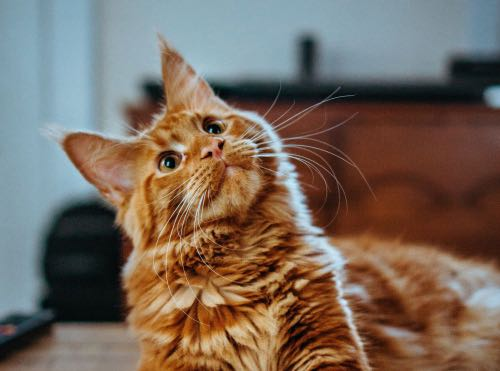 sweet looking cat