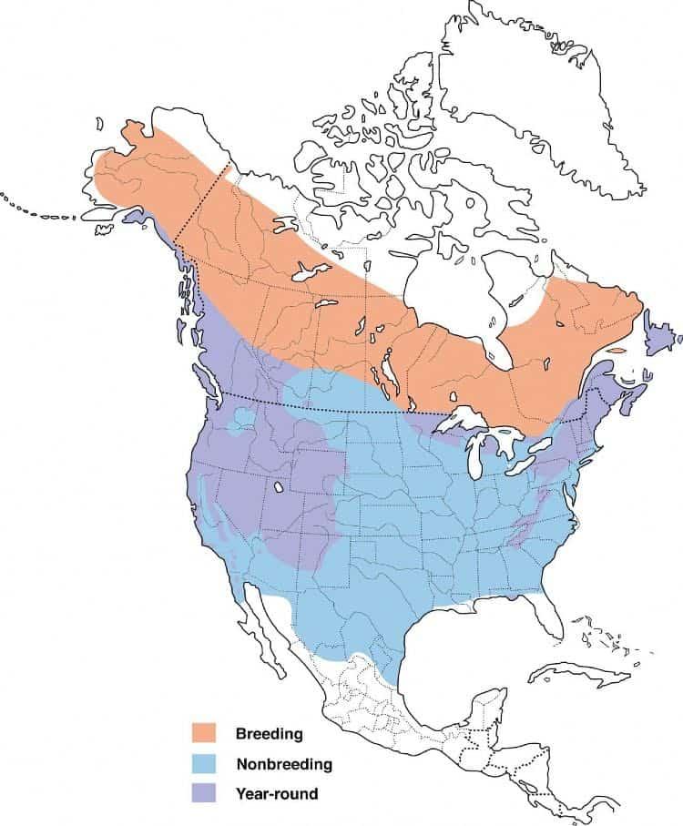 Map of the dark-eyed junco range
