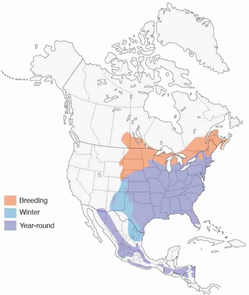 US map showing the migration range of the eastern bluebird