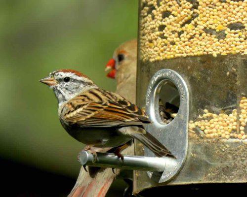 Clean Your Bird Feeders & Birdbaths to Avoid Getting Wild Birds Sick