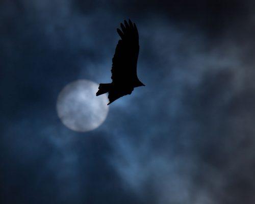 Do Birds Fly at Night?