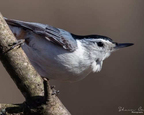 The Ultimate List of Blue-Colored Birds in Wisconsin