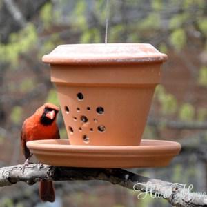 flower pot diy cardinal bird feeder