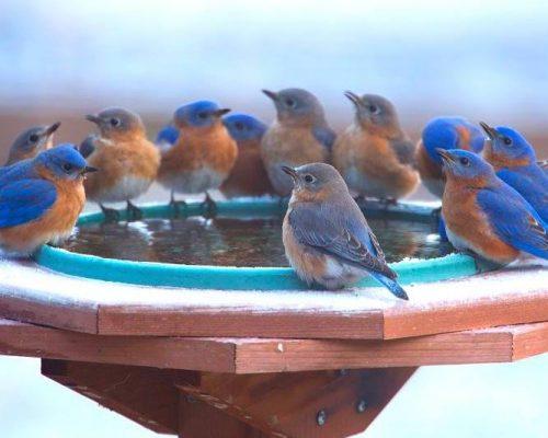 3 Best Heated Birdbaths for Winter 2021